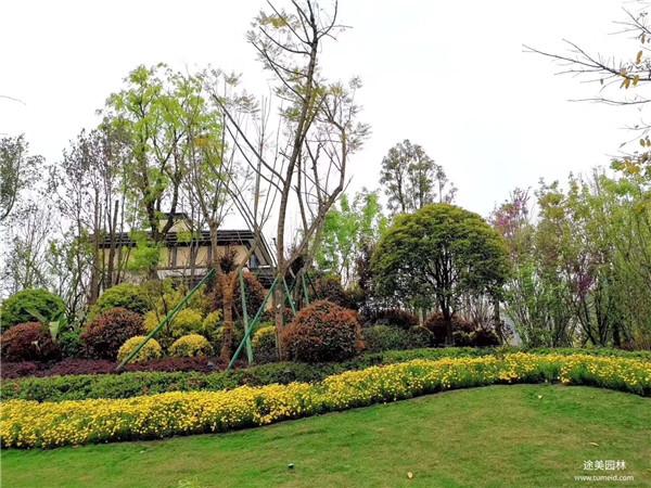 别墅区苗木施工种植效果图