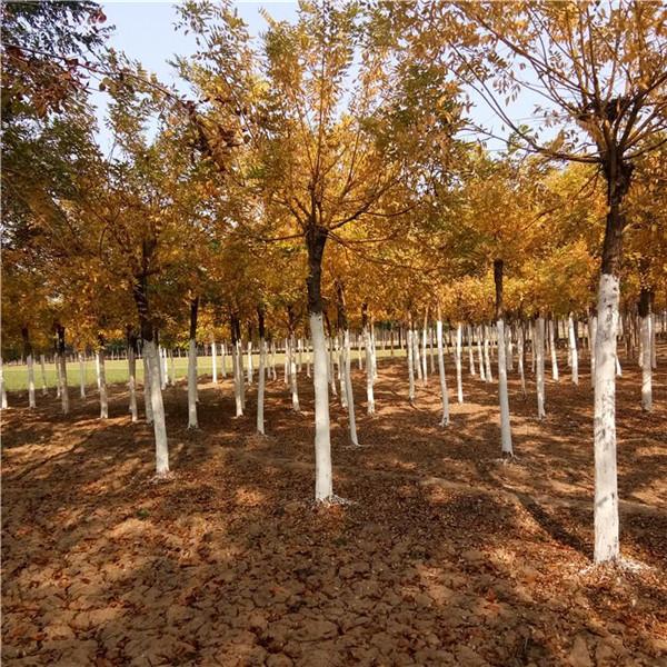 贵州碧桂园小区绿化项目