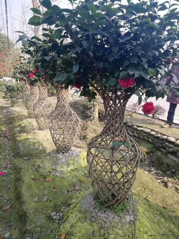 精品紫薇花瓶图片